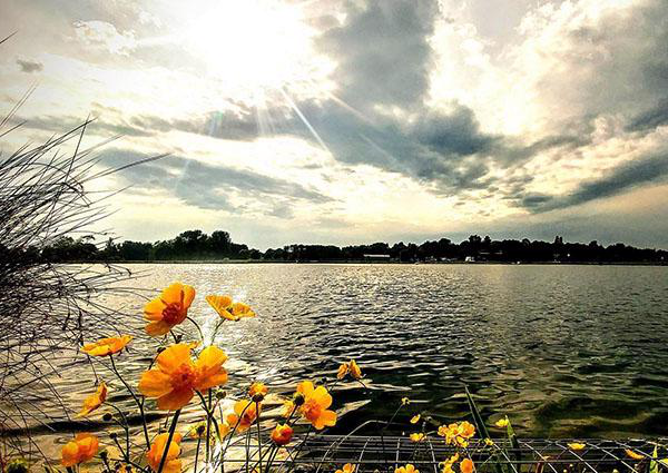 A view over the lake at 湖滨校区. The sun is setting 和 some orange flowers are  in close up in the foreground of the picture
