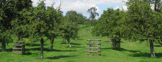 An orchard full of trees